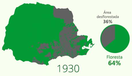 Floresta com Araucária em 1930