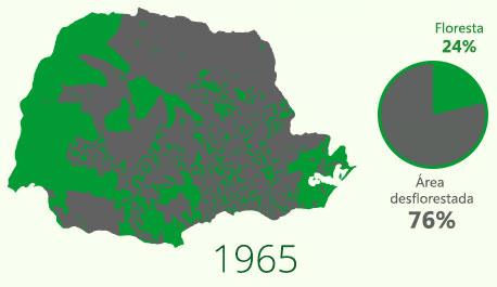 Floresta com Araucária em 1965