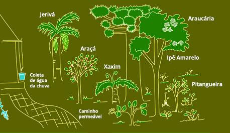 Jardim Nativo Conservacionista